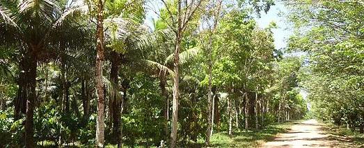Acompáñenos en la conferencia del CEDLA el 30 de abril «Transformation to Sustainability in the Amazon: The Role of Place-Based Farming Initiatives»